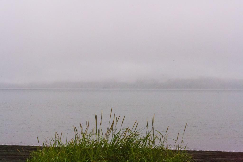 Туманный остров на фоне камыша